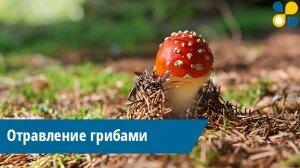 В Татарстане растет число отравлений грибами